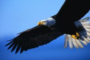 Vision Quest Eagle