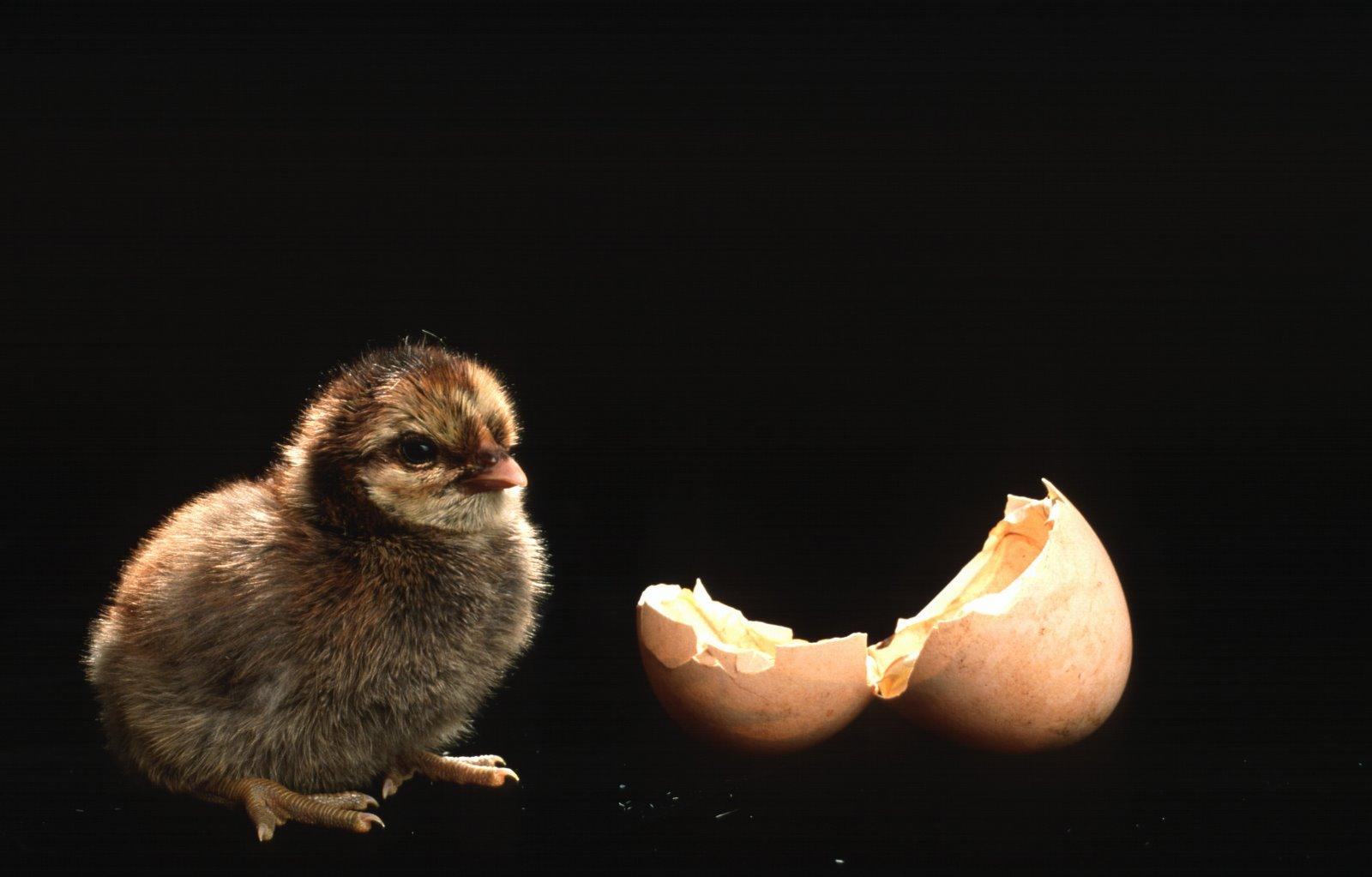 chick-stuckness