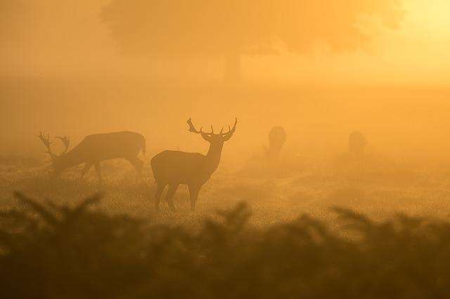 deer-1082318_640