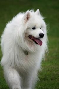 dog-78787_640