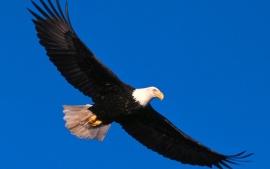 Eagle-vision-quest