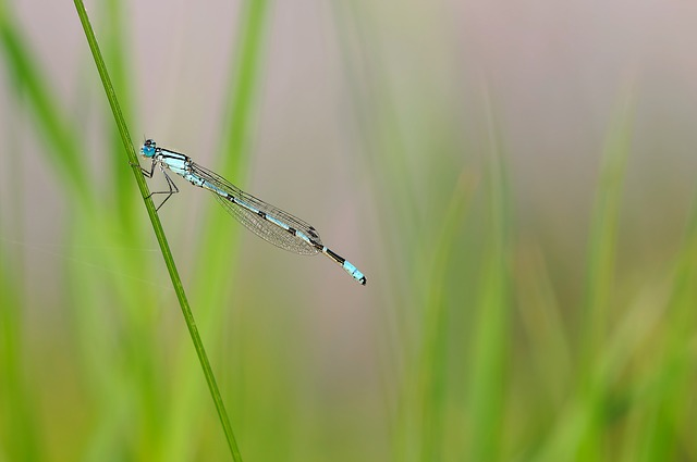 insect-208575_640