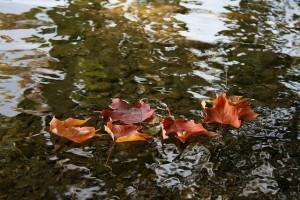 leaves-1121799_640