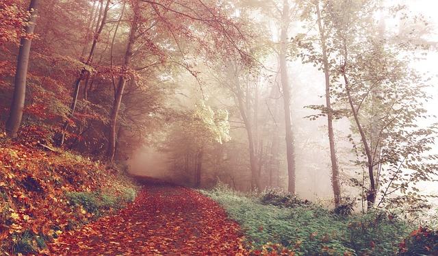path-1031114_640