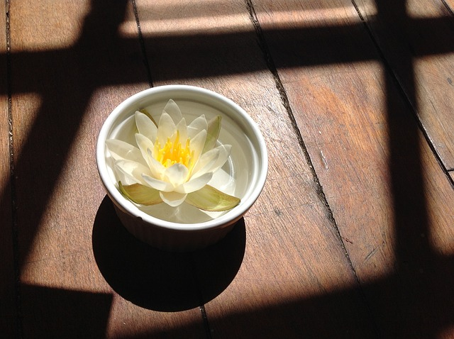 water-lily-64126_640