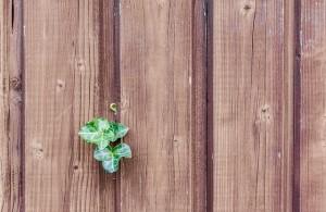 wood-482288_640